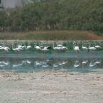 Pedro Muñoz celebrará el día mundial de las aves con distintas actividades dirigidas a niños y familias