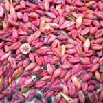 El IREC advierte de los efectos nocivos en perdices por el consumo de semillas tratadas con plaguicidas
