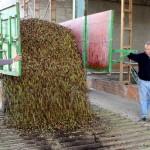 El Progreso de Villarrubia de los Ojos comienza a coger la aceituna y prevé una recolección corta de gran calidad