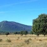 Cierran dos senderos de uso público para celebrar monterías privadas en el Parque Nacional de Cabañeros