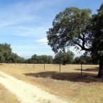 El borrador de la Ley de Montes no facilitará la venta de fincas públicas en Castilla-La Mancha