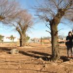 Tomelloso: Medio Ambiente ajardina las rotondas Florencio Aguado y Príncipe Alfonso