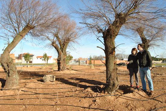 Medio Ambiente ajardina las rotondas Florencio Aguado y Príncipe Alfonso