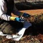 Aproca pide a las comunidades autónomas aprobar la homologación de los métodos de control de predadores