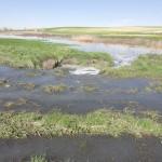 El Frente Cívico denuncia un nuevo vertido de aguas fecales a las Tablas de Daimiel