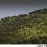 Más de 80 organizaciones piden que no se venda el patrimonio forestal público