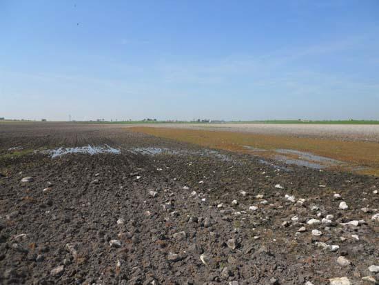 Detalle del primer afloramiento del acuífero en La Albuera. Foto: Tablasdedaimiel.com