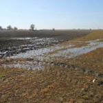 Fenómeno histórico en Daimiel: El Guadiana y el Acuífero 23 remontan las profundidades y afloran en lagunas olvidadas