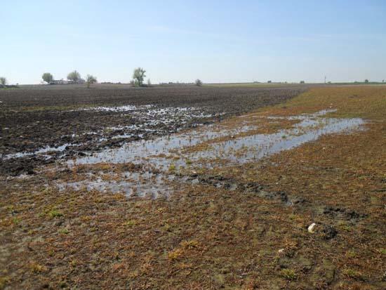 Detalle del afloramiento del acuífero en la Albuera. Foto: Tablasdedaimiel.com
