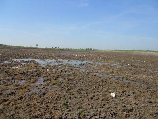Segundo afloramiento del acuífero en La Albuera . Foto: Tablasdedaimiel.com