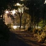 Ecologistas en Acción denuncia que la Junta pretende cerrar un camino público en las Lagunas de Ruidera
