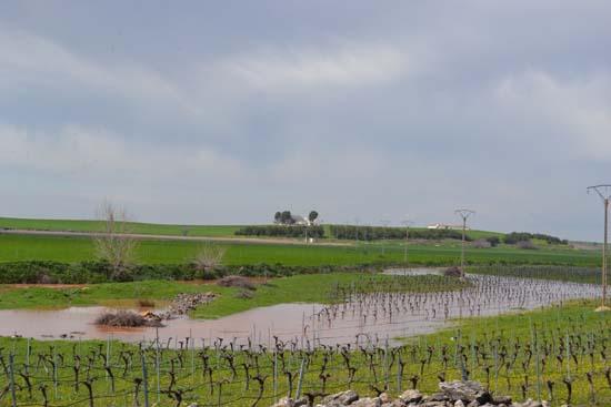 Finca inundada, entre el Azuer y el Guadiana - Mañana 3 de abril