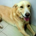 Puertollano: El embajador español en la República Democrática del Congo adopta una perra de la protectora Huellas