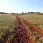 Ecologistas en Acción-Ciudad Real presenta alegaciones contra la venta de 13 caminos públicos de Valdepeñas