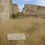 Lamentable estado de Alarcos: el Parque Arqueológico de Ciudad Real, sepultado bajo la broza