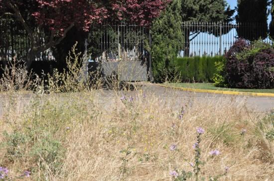 Camposanto rodeado por la hierba seca