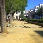 Las palomas y el albero