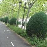 Ciudad Real: Vox denuncia el «desorden y descontrol» que provoca la circulación de bicicletas por las aceras