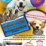 Villarta de San Juan vivirá un fin de semana entre bellezas caninas de distintas razas y galgos ingleses de alta competición