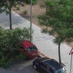 Ciudad Real: Otra rama se viene abajo en la calle Hidalgos
