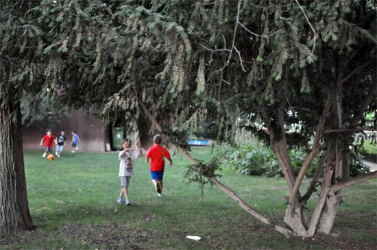Niños jugando bajo un tejo en el Parque de Gasset