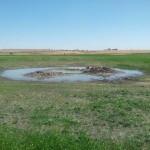 El agua aflora por fin en un antiguo ojo del Guadiana y un vecino pretende taparlo con tierra