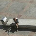 Ciudad Real: Aferrado a un banco de la Plaza Mayor