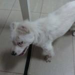 Puertollano: Fuyur, un bello dragón sin orejas que necesita tu ayuda