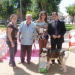"""El II Concurso Canino """"Ciudad de Daimiel"""" congrega a 52 canes"""