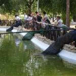 Manzanares: Buena jornada de pesca en el lago del Parque del Polígono