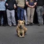 """La Plataforma por el Futuro de Puertollano llama a la """"insumisión y desobediencia fiscal"""" contra la nueva tasa por tenencia de perros"""