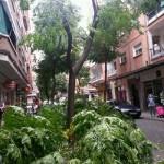 Ciudad Real: Se caen las ramas de otro árbol en la calle Calatrava