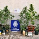 Ciudad Real: Detienen a dos personas por poseer 3,2 kilos de marihuana