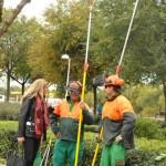 Ciudad Real: Las labores de poda afectarán a 12.000 árboles y tendrán un coste de 330.000 euros