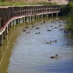 Someten a información pública los planes de gestión de las Tablas de Daimiel y los Humedales de La Mancha