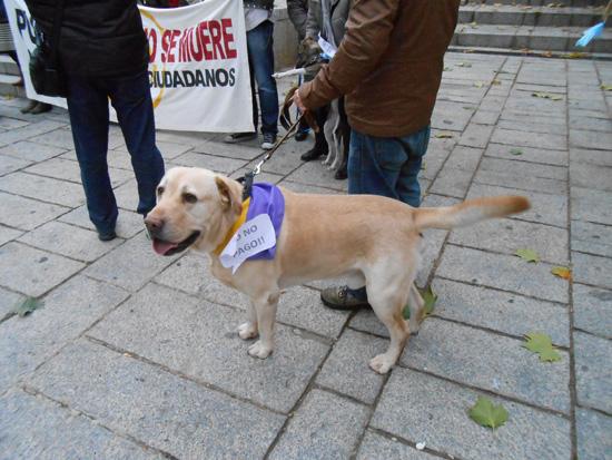 puerto_plataforma_perros02