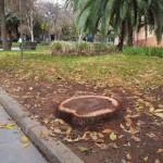 ¿Puertollano desarbolado? El Ayuntamiento prosigue con las talas y ecologistas denuncian que la ciudad ha perdido el 20% de sus árboles
