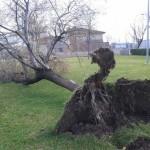 La ciclogénesis acaba con más árboles en Almagro y Daimel
