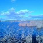 El Ayuntamiento de Daimiel asegura que  sigue trabajando para mejorar la situación en las inmediaciones de la Laguna de Navaseca