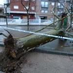 El viento se lleva por delante señales y arranca de cuajo un árbol en Manzanares