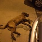 Ciudad Real: Lanzan un perro por la ventana durante una riña en el barrio de los Ángeles