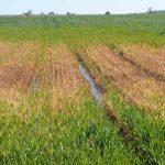 Daimiel: La laguna de Escoplillo tiene agua 35 años después de su drenaje