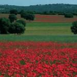 """Agricultura condona más de un millón de euros a grandes fortunas para que conserven como """"Monte Singular"""" sus propiedades en el Valle de Alcudia y Cabañeros"""