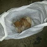 Puertollano: Rescatan a cinco gatos que fueron arrojados a un contenedor dentro de una bolsa de plástico