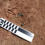 Montiel: Hallan cascabeles medievales en la tumba de un niño