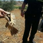 Puertollano: La Policía Local atrapa al legendario chotacabras