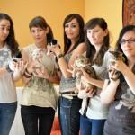 Ciudad Real Felina, una nueva protectora orientada a los gatos