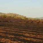 El Incendio entre Alamillo y Chillón arrasa más de 200 hectáreas