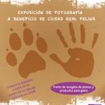 """""""Ponte en su lugar"""", una exposición fotográfica para ayudar a los gatos rescatados por Ciudad Real Felina"""
