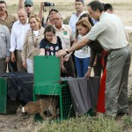 «Lo confundieron con un zorro»: La Federación de Caza y los productores piden «prudencia» ante la muerte del lince abatido por un disparo